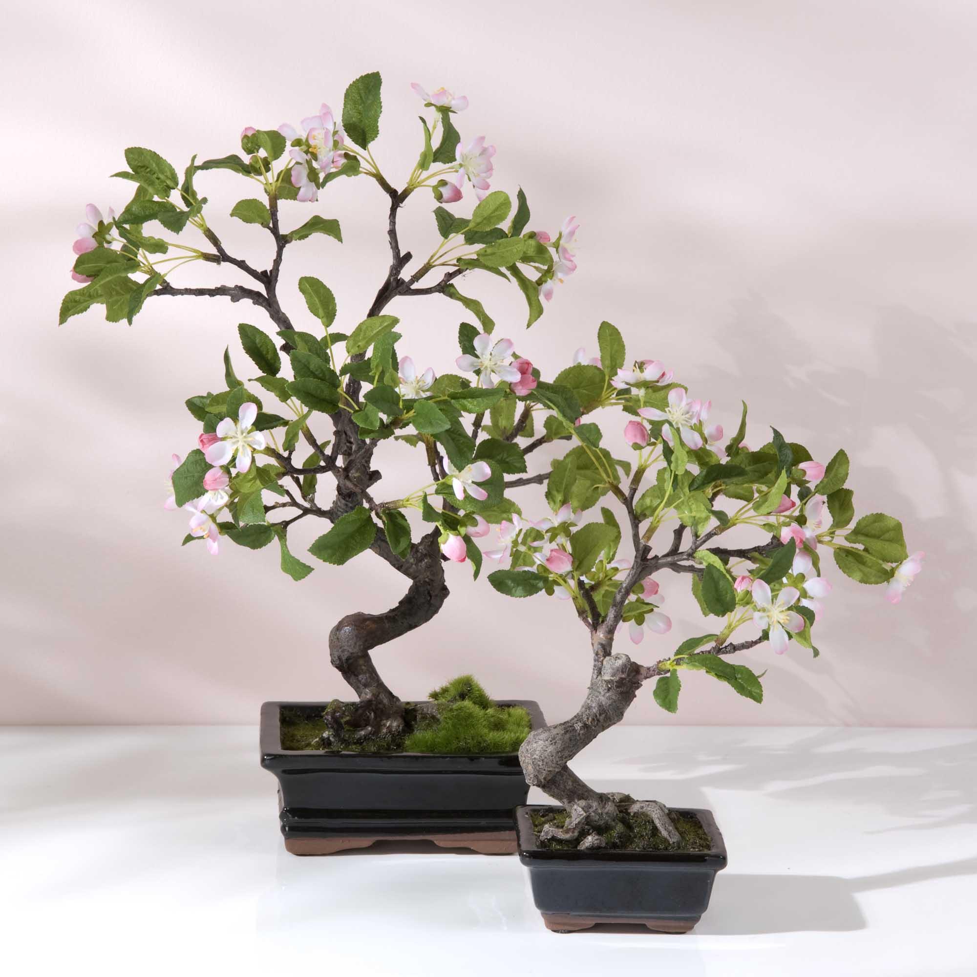 bonzai-cerisier
